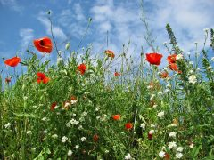 meadow-366613_640.jpg